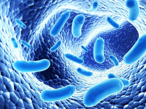 Национальность человека научились определять по бактериям