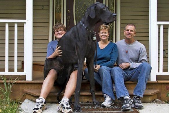 Скончался самый большой в мире пес