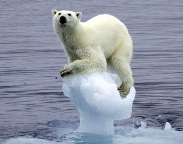 Россия экономит на глобальном потеплении