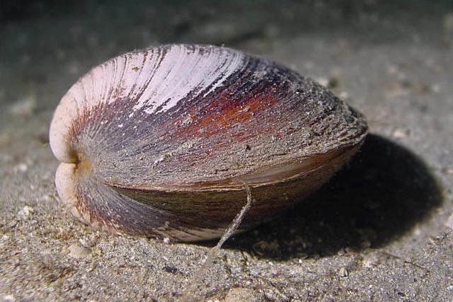 Ученые случайно убили самое старое животное на Земле