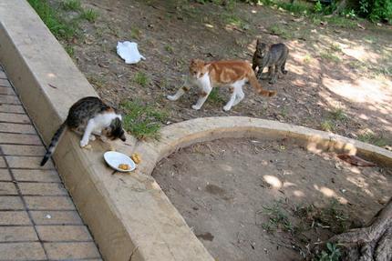 Японец грабил дома, чтобы кормить кошек