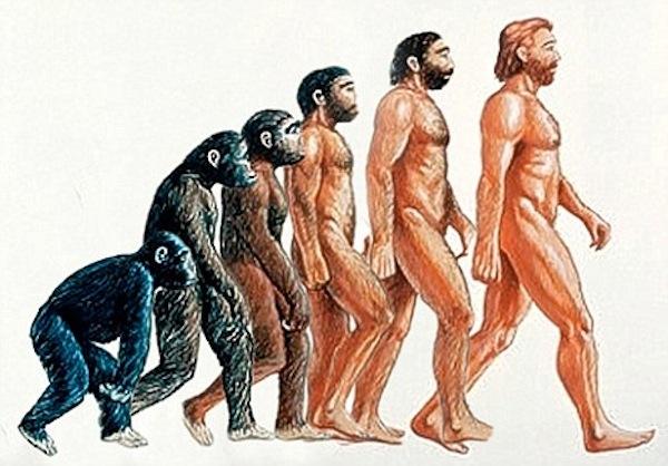 Треть американцев отвергают теорию эволюции