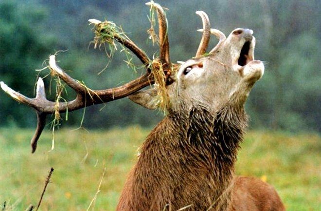 Сотрудники Минприроды Якутии промышляли браконьерством