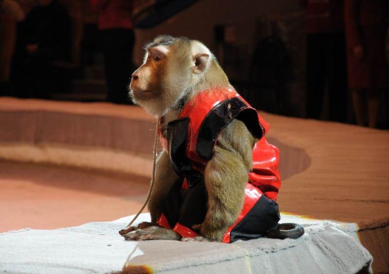 Цирковых животных спасли в 40-градусный мороз на трассе под Нижневартовском