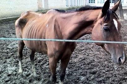 В Омской области  на разорившейся ферме лошади умерли от голода