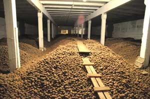 Причиной смерти четырех человек в Красноярском крае назван картофель