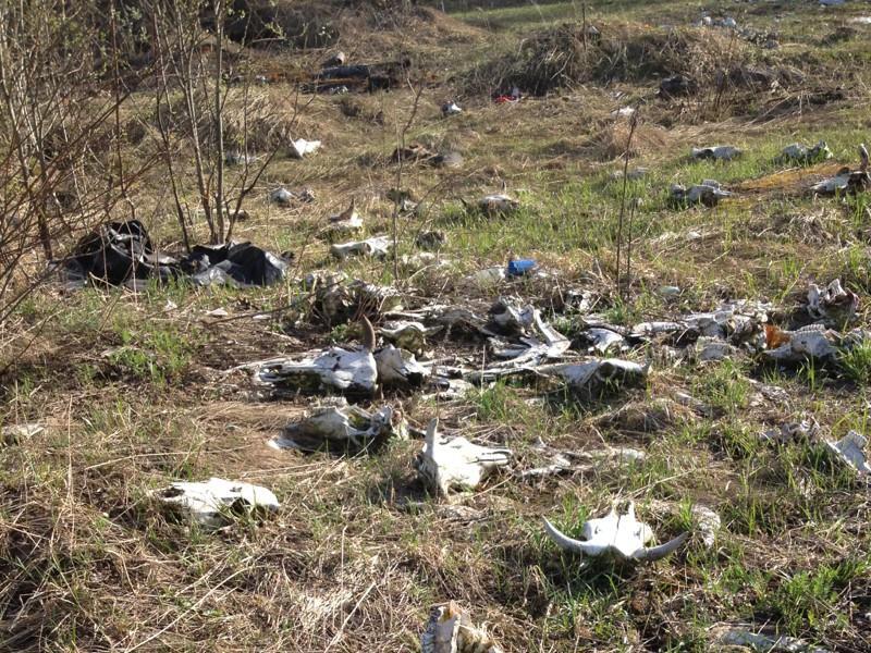 Бесхозный скотомогильник обнаружен в Иркутской области