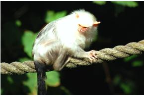В Амазонии обнаружили 155 новых видов животных