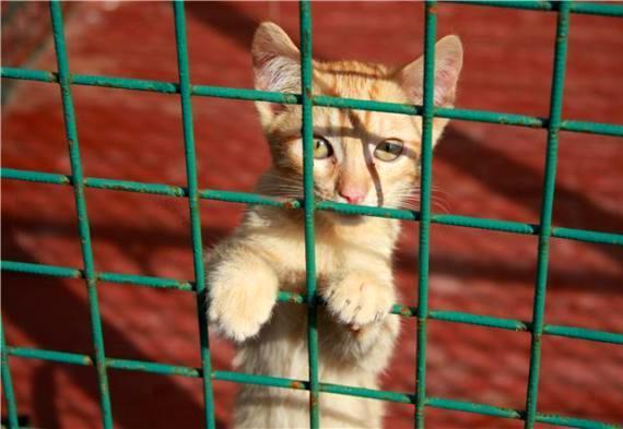 Хочешь меньше платить за коммуналку? Возьми из приюта кошку!