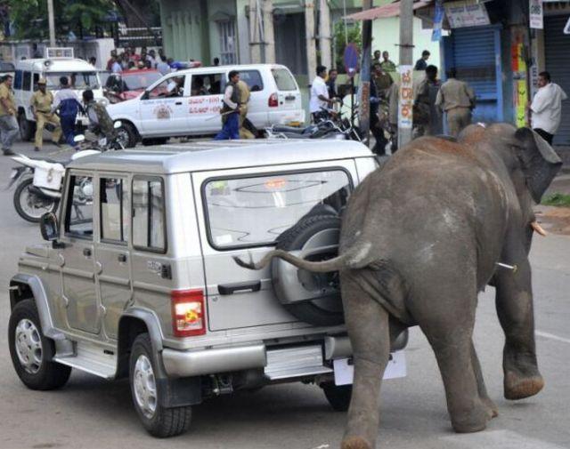 Слоны сбежали из цирка и устроили побоище на автостоянке