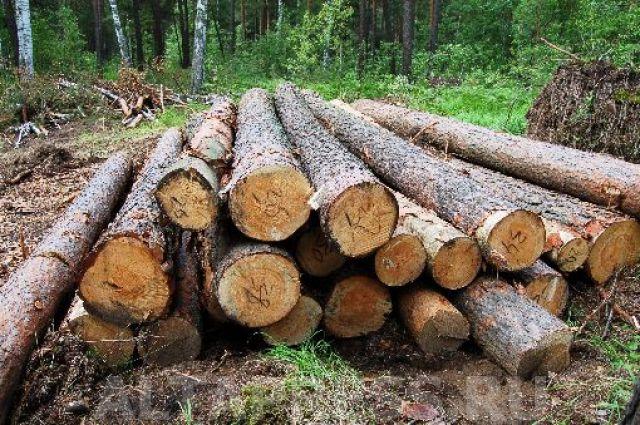 Алтайский лес идет в расход для Китая и Казахстана