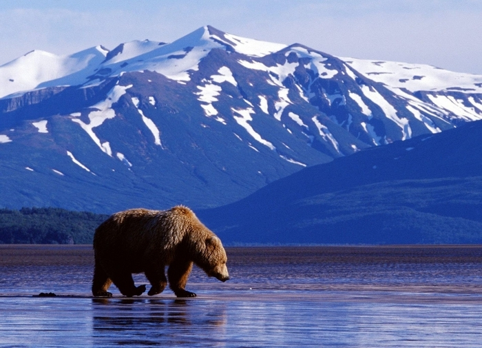 Почти 22 тысячи голосов набрала петиция о присоединении Аляски к России