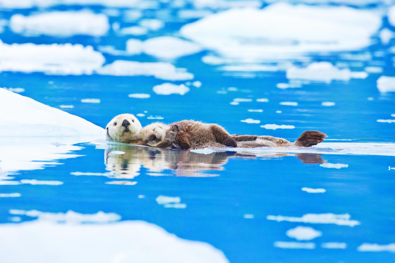 Более 30 тысяч голосов уже набрала петиция о присоединении Аляски к России