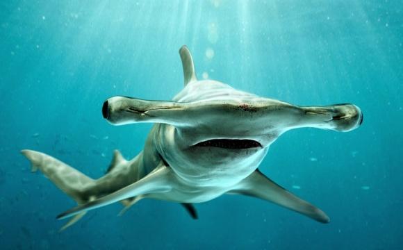 Американский студент, поймавший на крючок акулу, два часа плавал по океану – рыба тянула байдарку