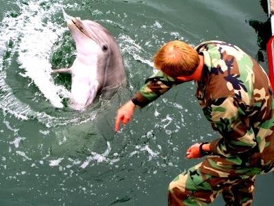 Боевые дельфины из США пройдут подготовку на Черном море