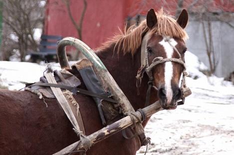 Пьяный наездник в Хакасии врезался в ГАЗель
