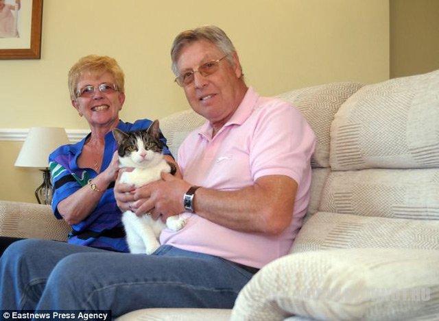 Кот просидел пять дней внутри проданного дивана
