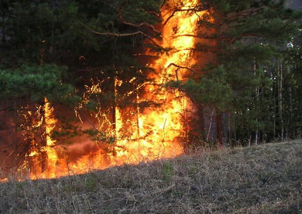 В Амурской области зарегистрировано 86 пожаров, на которые уже сбросили 400 тонн воды
