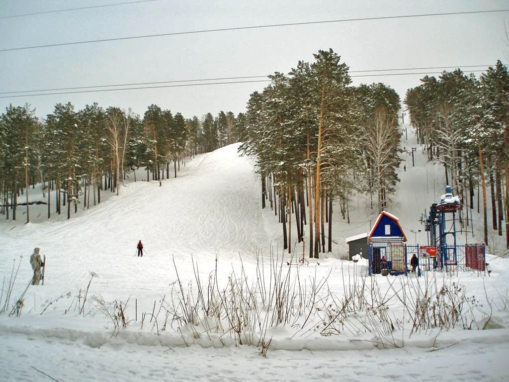 В лесу под Красноярском обнаружено тело новорожденного