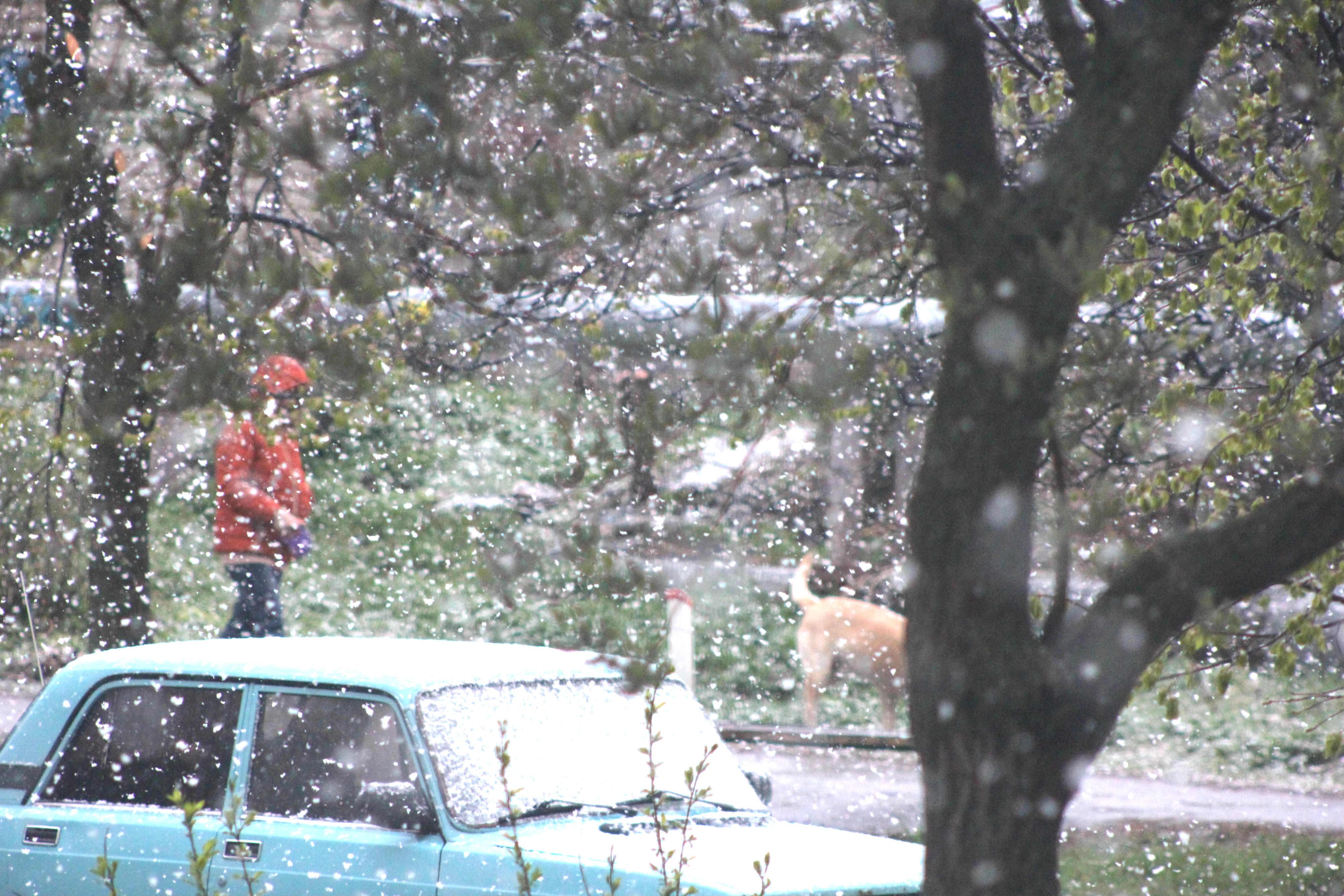 Утром 7 мая в Подмосковье пошёл снег