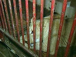 Львица, которую женщина пыталась провезти в купе поезда, умерла