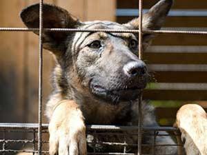 В Славянске в приюте для собак начали появляться «беженцы»