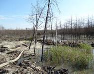 9 мая в лесах под Ровно снова победили партизаны
