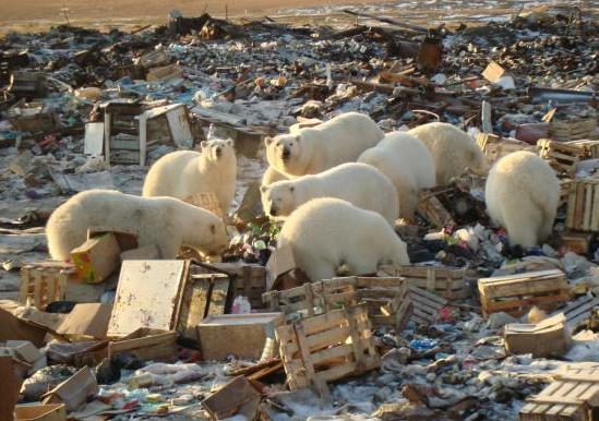 Россия ежегодно теряет 4-6% ВВП из-за ухудшения состояния окружающей среды