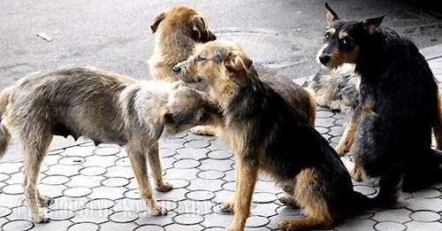 В Красноярске вновь начнут отлавливать бездомных псов
