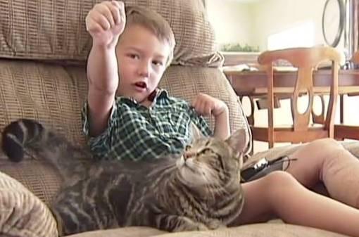 Кота-спасителя из Калифорнии будут чествовать во время местного бейсбольного матча