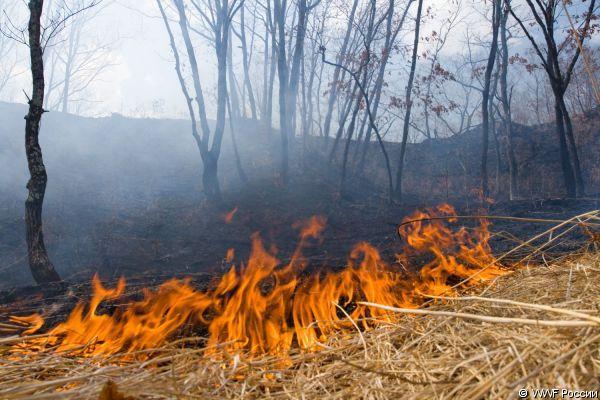 Лесные пожары вновь заполыхали в Приморье
