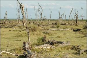 Климатические катаклизмы