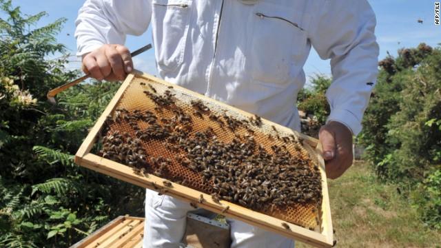 Барак Обама занялся спасением пчел