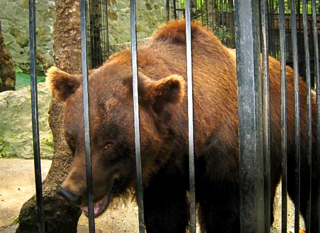 В Ростовской области медведь откусил руку маленькой девочке