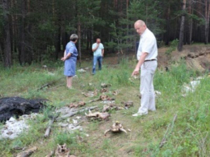 Головы коров и лошадей обнаружили под Ангарском
