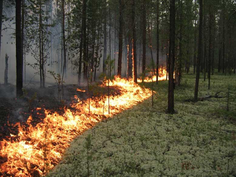 Подмосковные леса закроют для посетителей