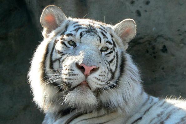 Обсуждается страхование посетителей Московского зоопарка от несчастных случаев