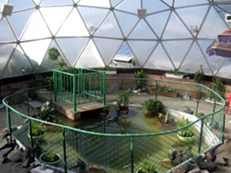 Иркутский контактный зоопарк обзавелся карпами