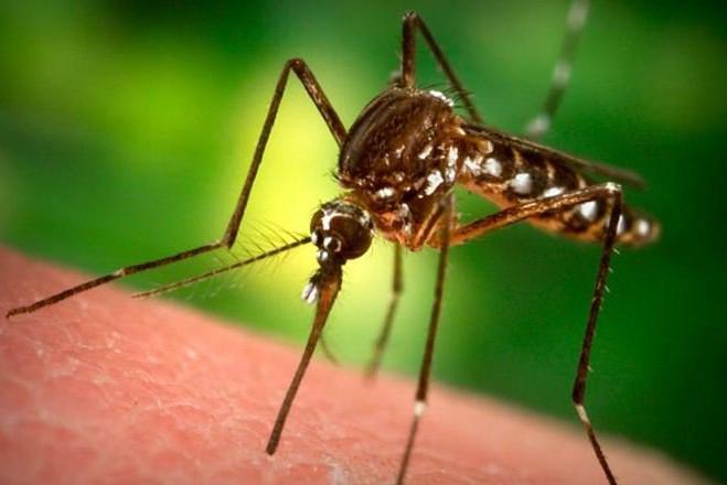 Переносчики малярии меняют запах своей жертвы