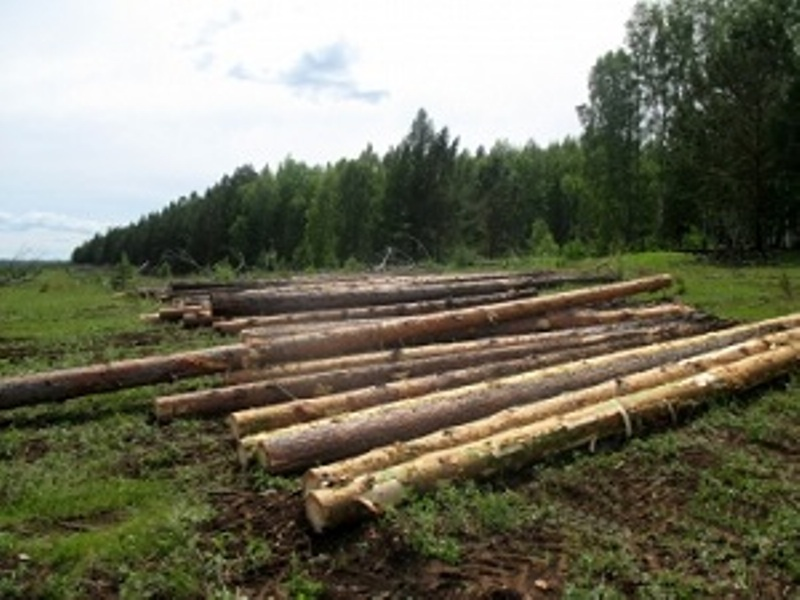 Китайцев оставят без русского леса