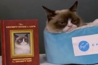 Grumpy Cat представил в Нью-Йорке свою книгу