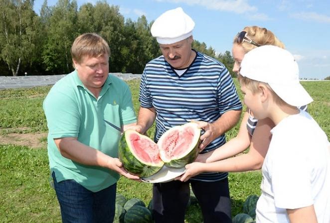 Лукашенко приказал выращивать в Белоруссии арбузы и дыни