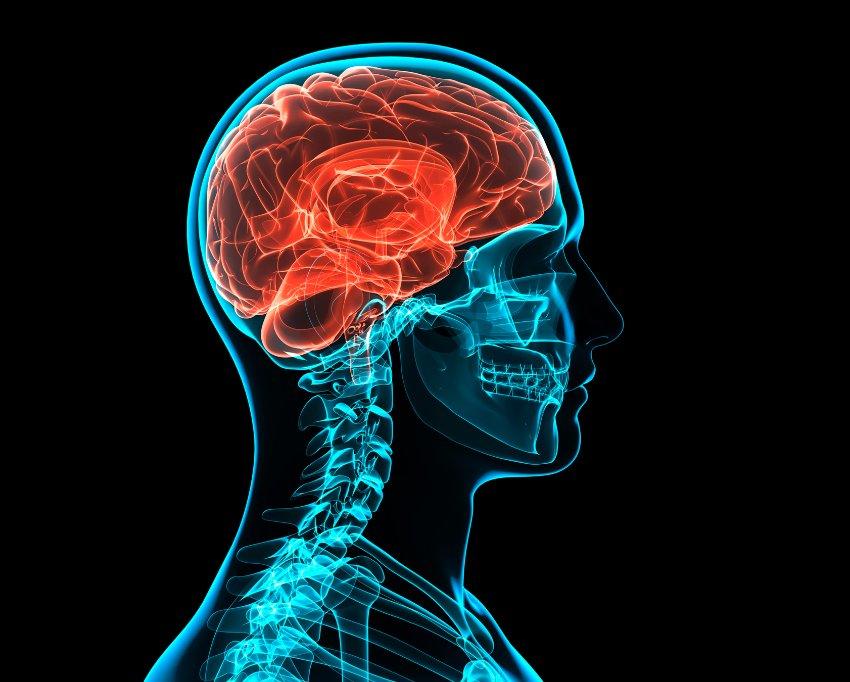 Развитие мозга влияет на рост детей