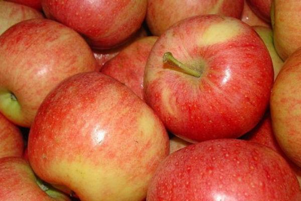 Импорт в Россию молдавских яблок может возобновиться в ближайшее время