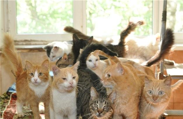 Подросток, вынужденный жить с 60-тью кошками, покончил с собой в Петербурге