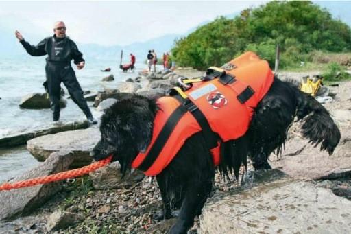 На пляжах Москвы будут выставлены спасательные посты с ньюфаундлендами