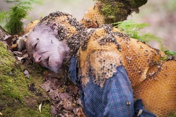 От аномальной жары в Москве сошли с ума осы