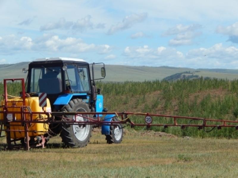 Поле дикорастущей конопли обнаружили в Иркутской области