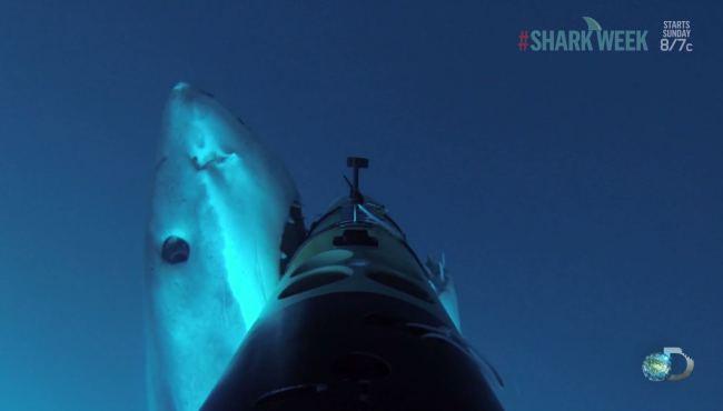 Акула напала на робота