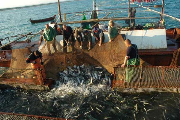 Сахалинские рыбаки против отмены дрифтерного промысла